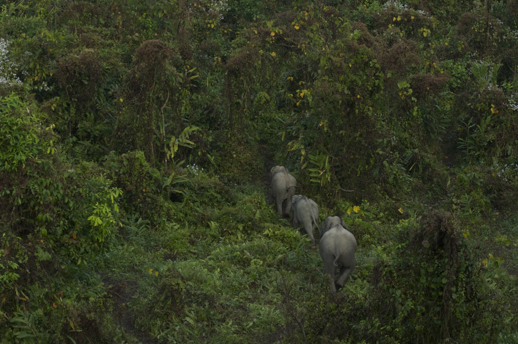 Elephants making their way in the forest