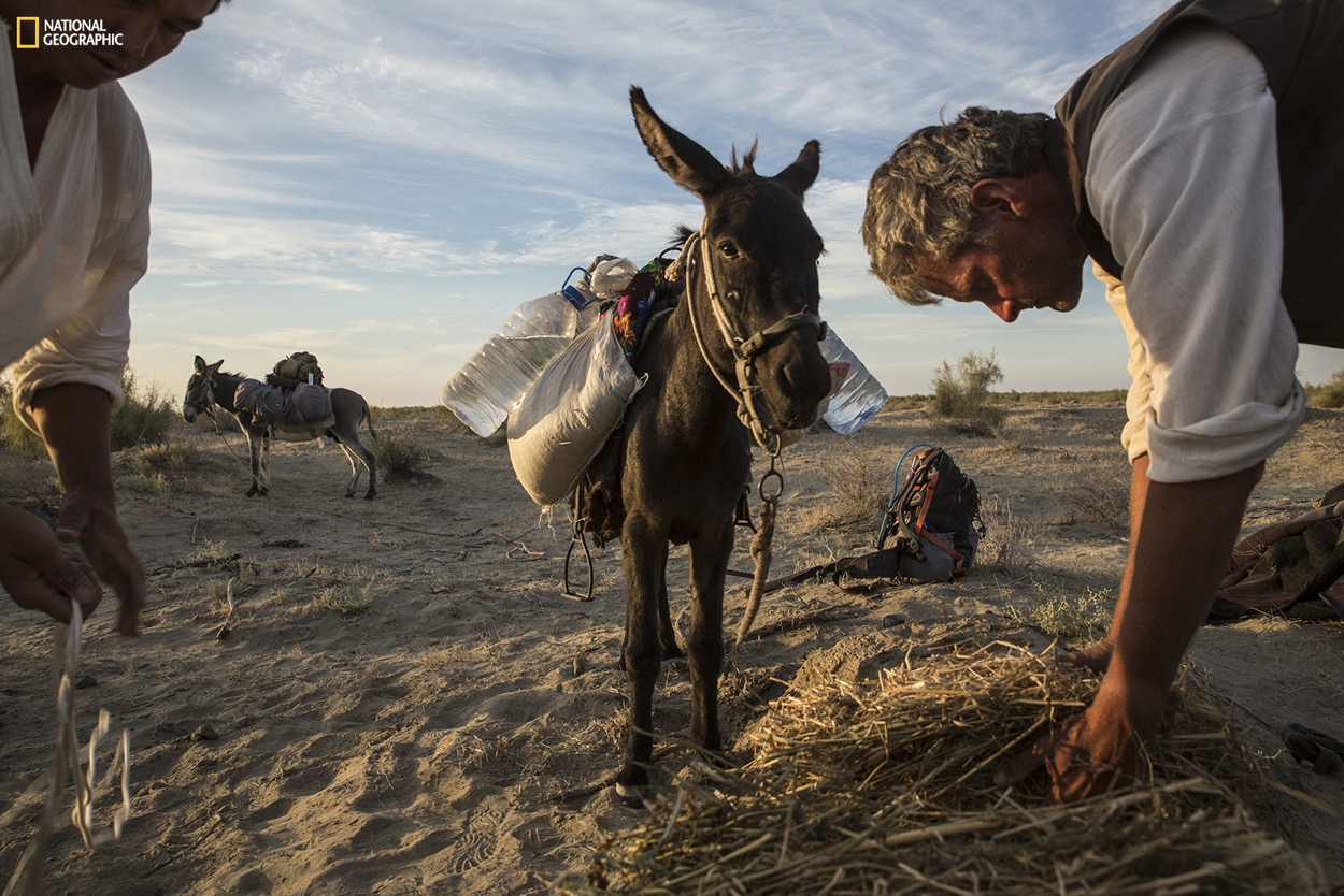 National Geographic Fellow Paul Salopek often uses cargo animals to carry supplies on his 21,000-mile trek across the world for the Out of Eden Walk project. Here, he feeds pack donkeys in the remote Kyzyl Kum desert of Uzbekistan. Photograph by John Stanmeyer / National Geographic