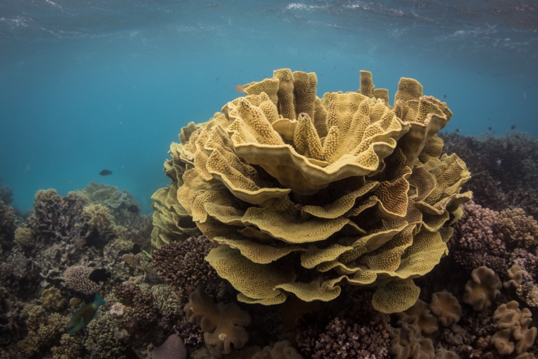 Image of the Great Barrier Reef taken late July, after this year's bleaching event. Photo © Brett Monroe Garner