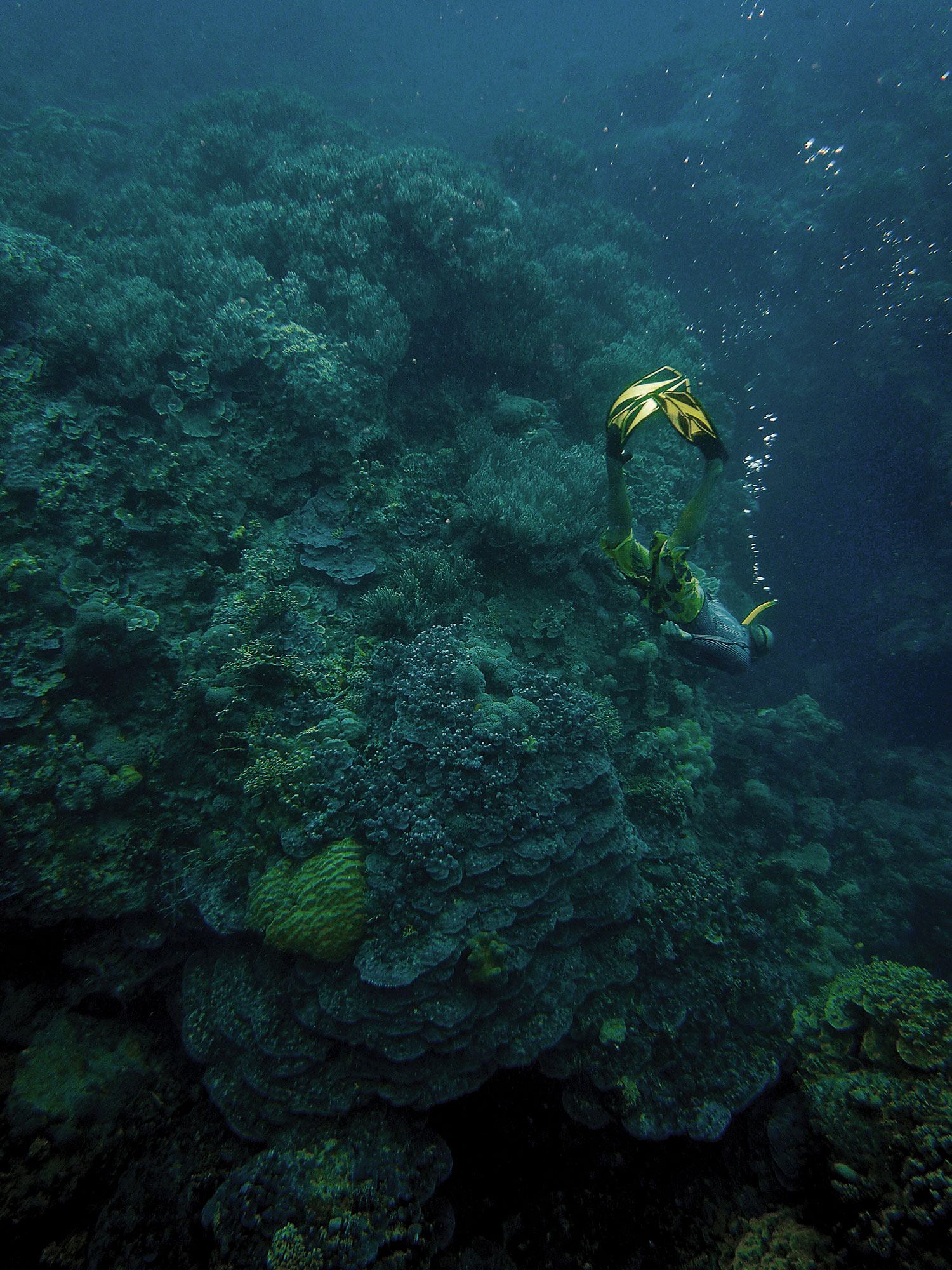 The Temotu Province of the Solomon Islands boasts pristine reefs with jaw-dropping diversity of coral and fish. So far, these remote islands have avoided the industry, industrial agriculture, concentrated tourism, and dense population centers that have severely damaged so many coral reefs around the world.
