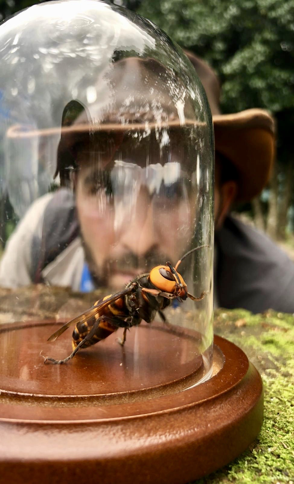 Coyote Peterson Kills the Murder Hornet Myth