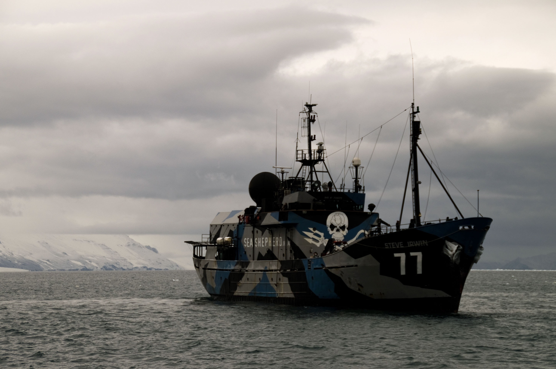 The Sea Shepherd vessel. Photo: Nico Edwards