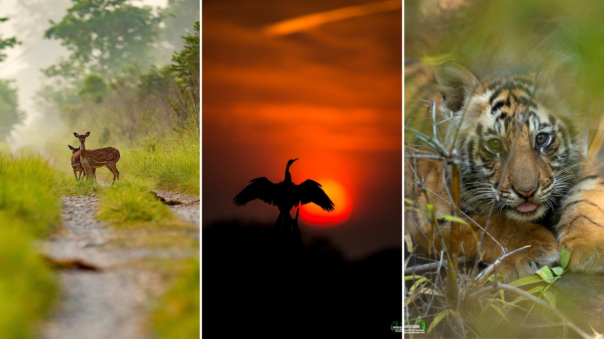 Suyash Keshari wildlife