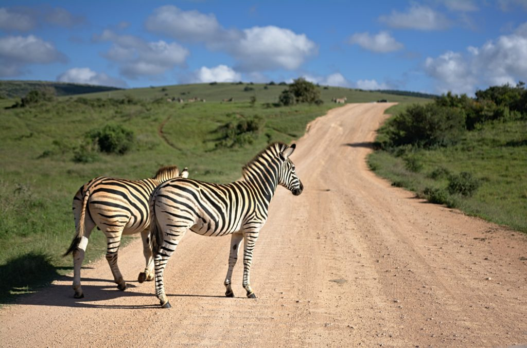 African Safari, Conservation and The Covid Connection